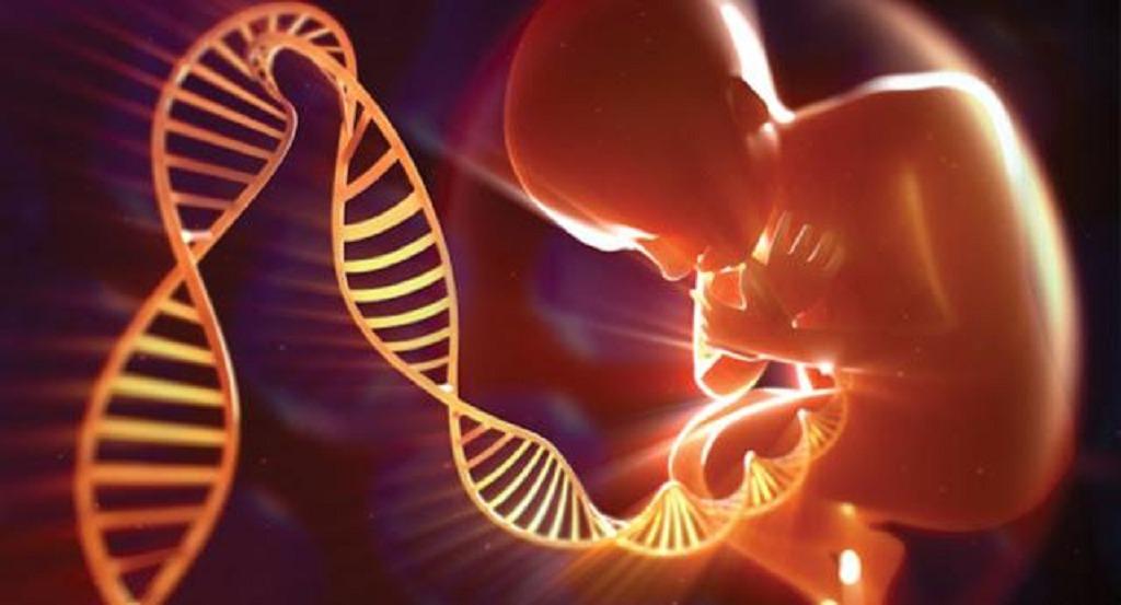 modificaciones geneticas